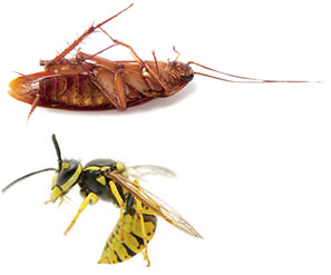 Ortho Pest Control 04