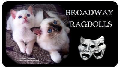 Broadway Ragdolls Cattery
